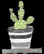 plantes-d'intérieur