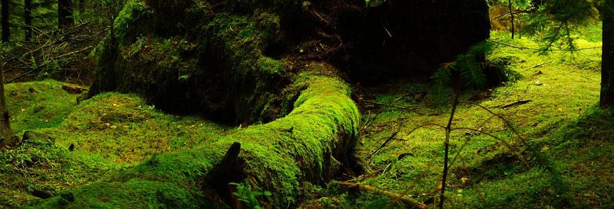 mousse végétale décorative