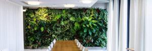 Bienfaits des plantes naturelles