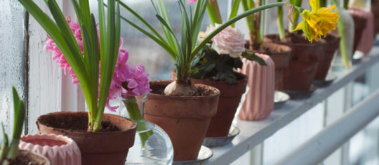 pots de fleurs et jardinières de qualité
